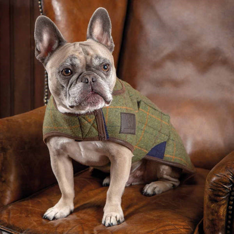 Digby & Fox Tweed Dog Coat