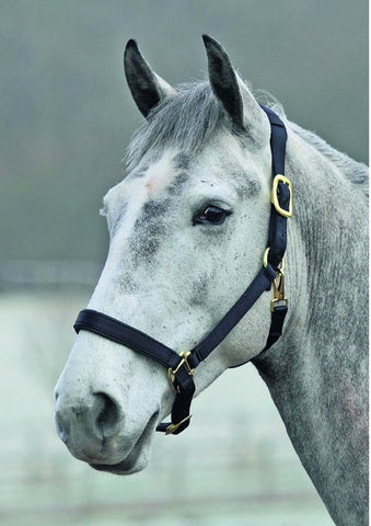 Headcollar In Black
