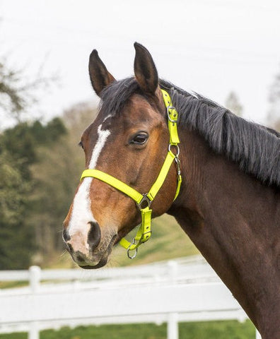 Fluorescent Headcollar In Yellow