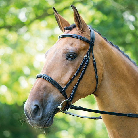 Lavello Raised Cavesson Bridle