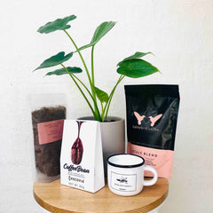 Best Indoor Plant Gifts for Mother's Day
