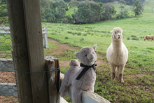 Load image into Gallery viewer, Petite Vous Llama Soft Toy - Latte