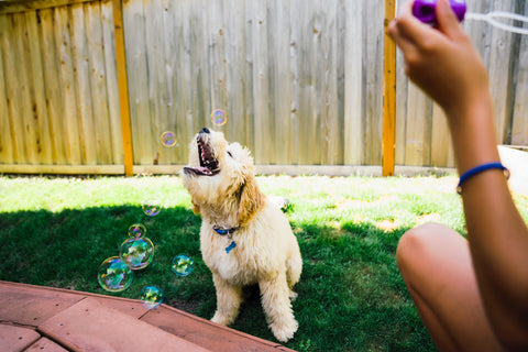 dog bubble game
