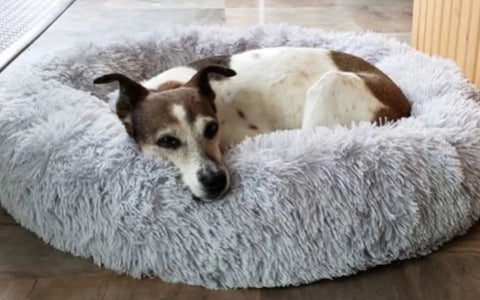 white brown anxious dog sleeping in a calming donut bed | malamute pet shop