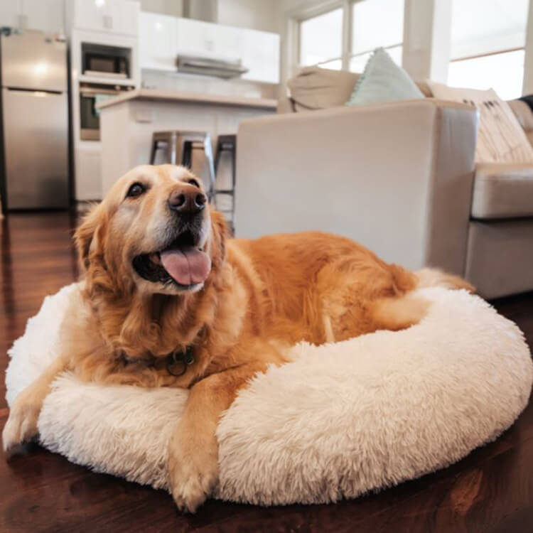 [Last Day Promotion, 50% Off] MALAMUTE ComfortBed™ | Therapeutic Dog Calming BedDog Bed Cream / S - 50cm/19.5inch - Malamute Pet Shop