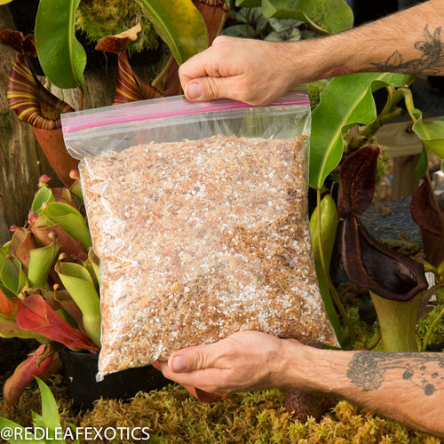redleaf exotics – nepenthes for sale-507