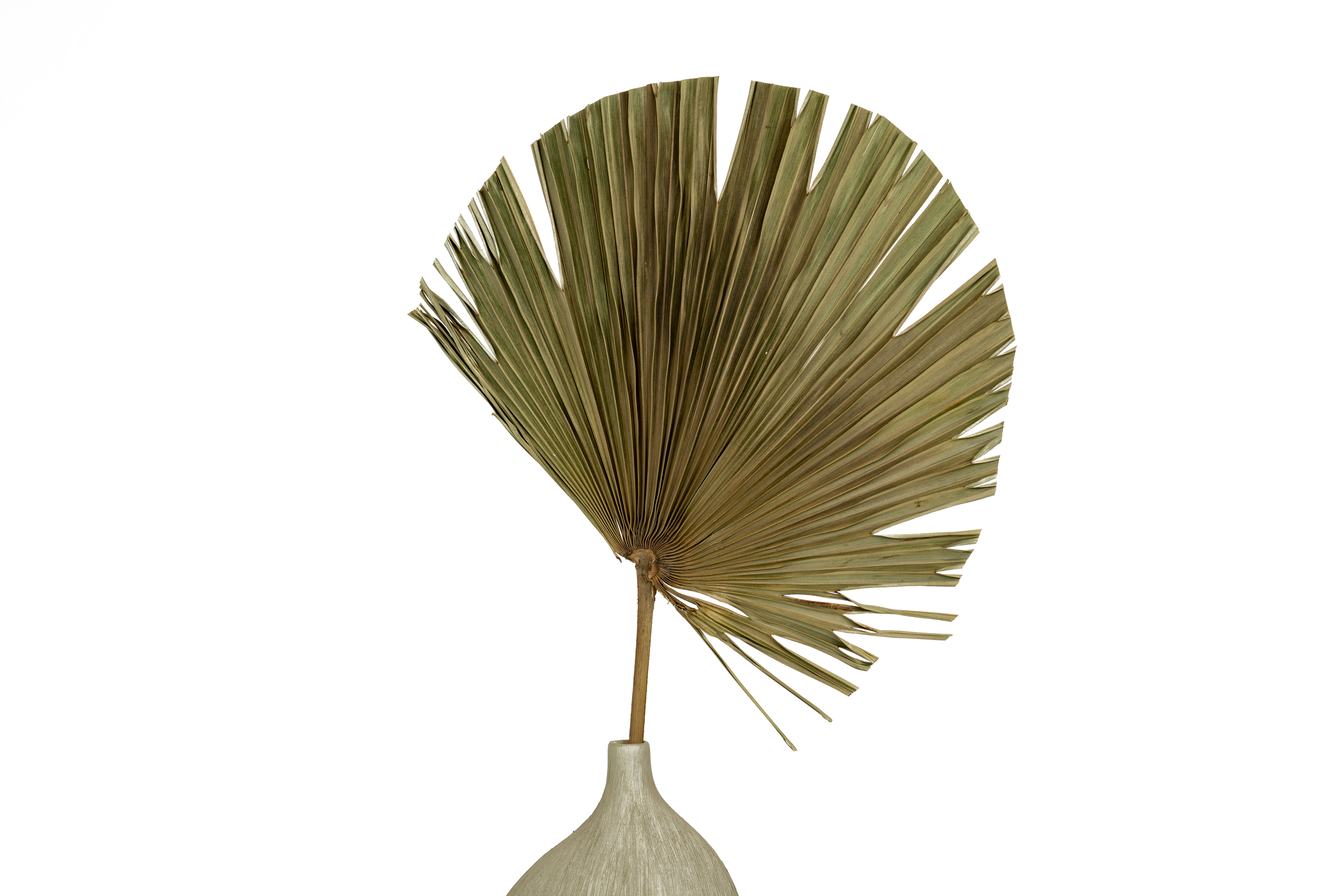 ASSORTED TRIMMED PALM LEAVES