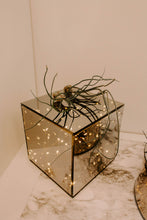 Load image into Gallery viewer, Tillandsia Bulbosa Air Plant