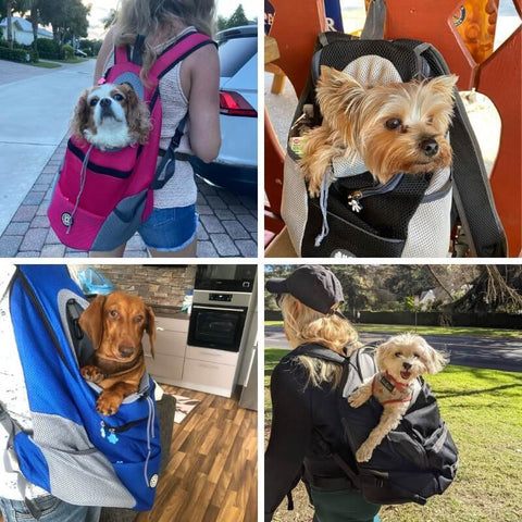 backpack for dog owners