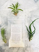 Load image into Gallery viewer, A packet of 12-month supply of air plant fertilizer surrounded by 3 small air plants on a marble background.