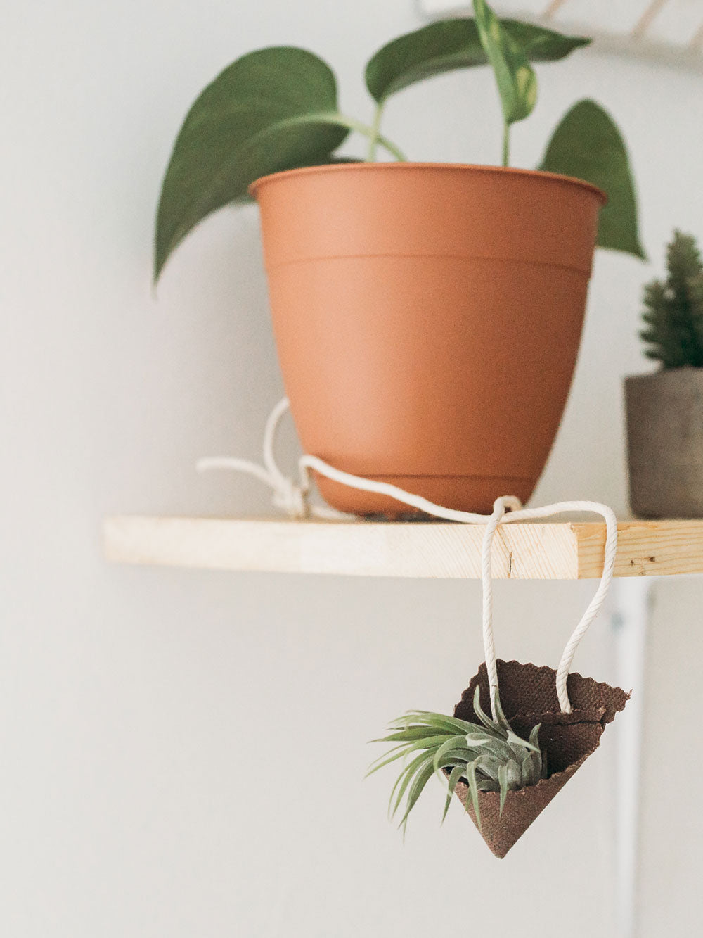 An air plant sits in a dark brown fabric cone holder. The air plant holder hangs from its cord from the edge of a wooden floating shelf. Another plant with a few medium sized leaves sits on the shelf in a terra cotta colored plant holder.