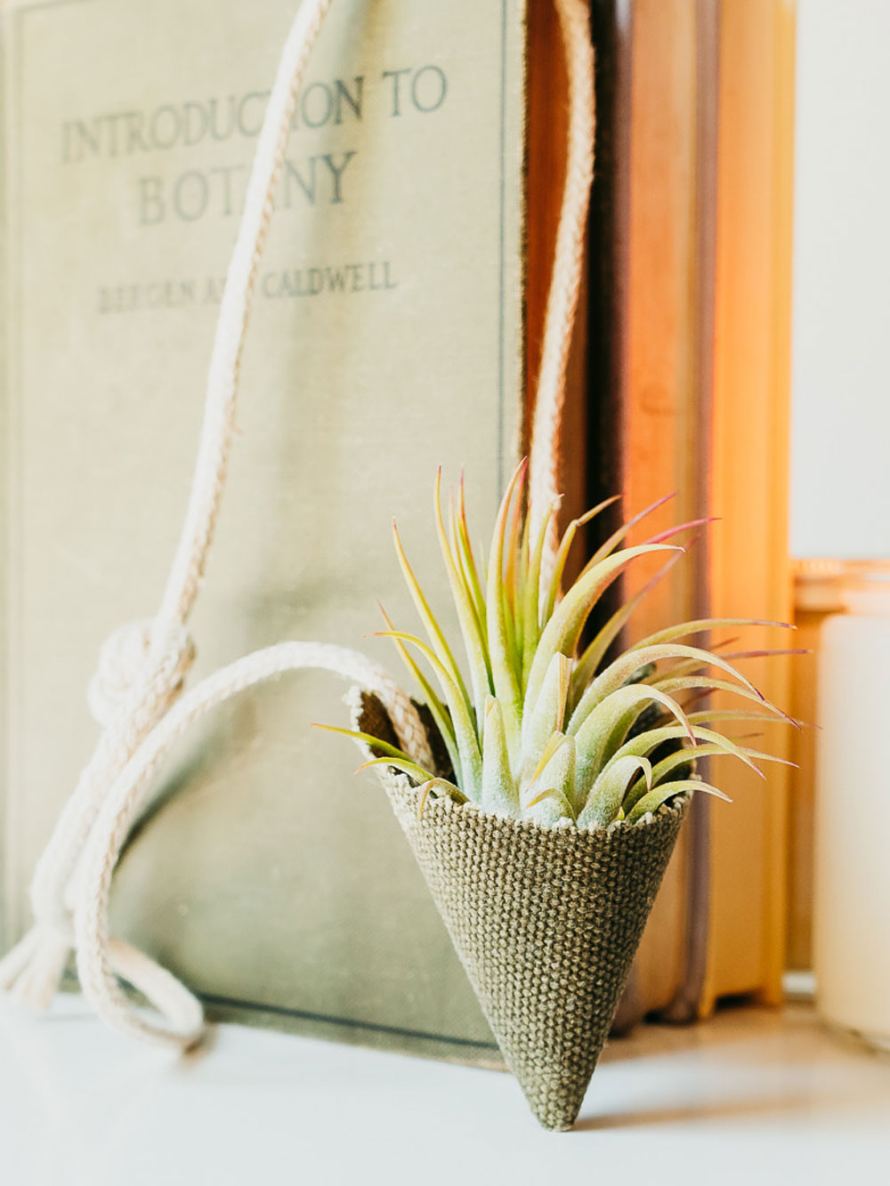 An air plant stands in a green fabric cone plant holder. A thick cord from the holder is draped over a book title Introduction to Botany.