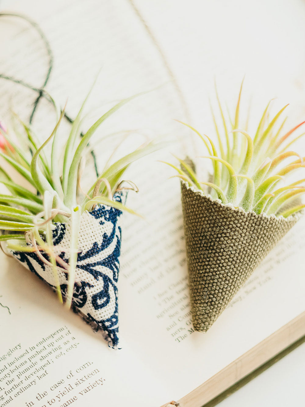 Two air plants sit in fabric cone shaped air plant holders. They are sitting on an open book. One plant holder is a blue and white print, the other a sage green canvas.