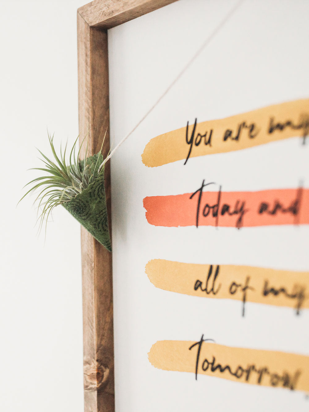 An air plant sits in a green swirl print cone plant holder. The cord from the plant holder is strung over the edge of a framed print. A few words can be seen from the print: you are; today; all of my; tomorrow.