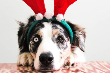 Vale Pet Foods: keeping weight off at Christmas