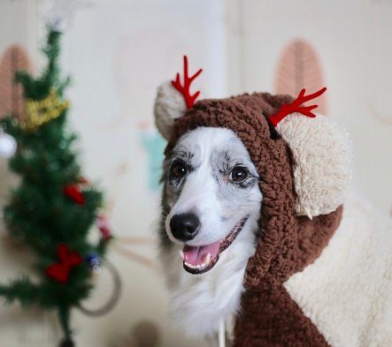 Vale Pet Foods: food to avoid at christmas