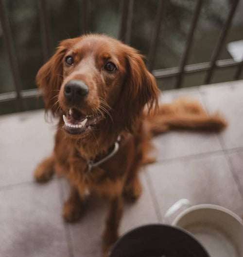 Vale Pet Foods: changing foods