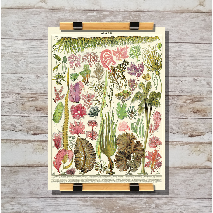 Cavallini & Co. Algae Decorative Wrap
