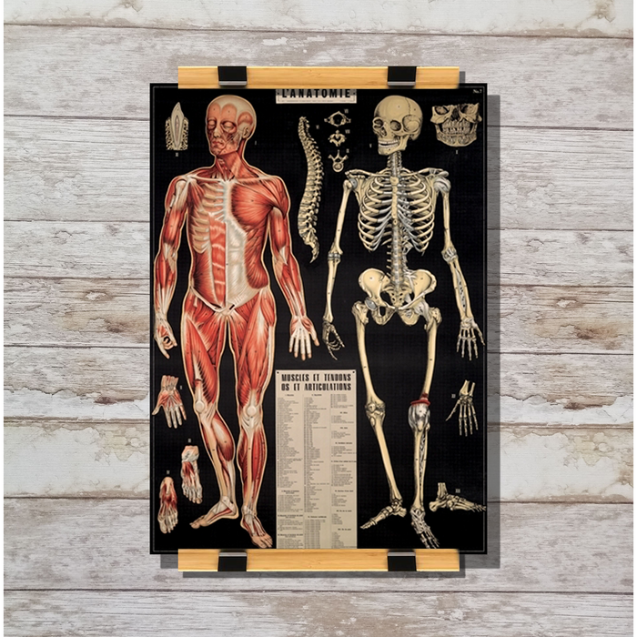 Cavallini & Co. L'anatomie Decorative Wrap