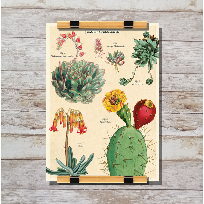 Cavallini & Co. Cacti &Succulents No. 2 Decorative Wrap