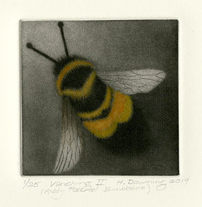 Holly Downing: Vanishing II (Rusty Patched Bumblebee)