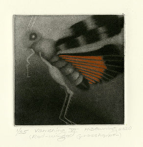 Holly Downing: Vanishing VI (Red-winged Grasshopper)