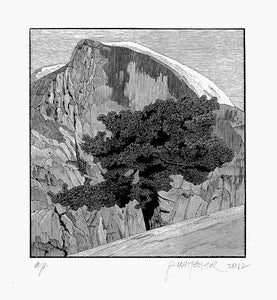 Richard Wagener: North Dome Tree