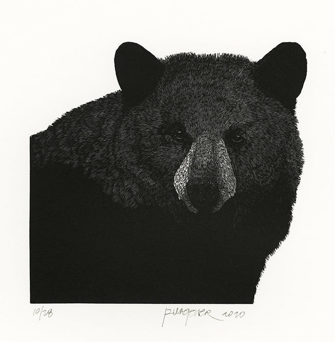 Richard Wagener: Black Bear