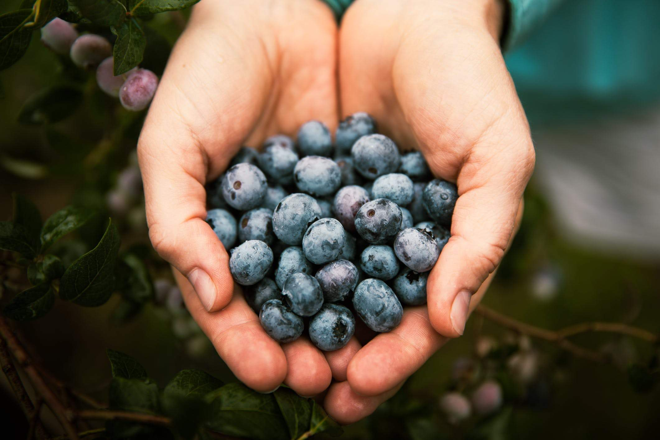 Blueberries: Are They the Next Big Thing in Nutritional Supplements?