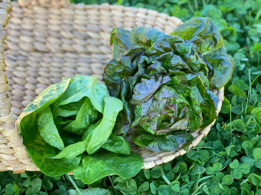 Grower's Choice Lettuce