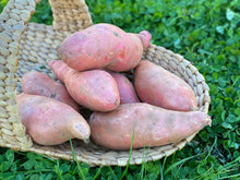 Load image into Gallery viewer, Sweet Potato 1Lb