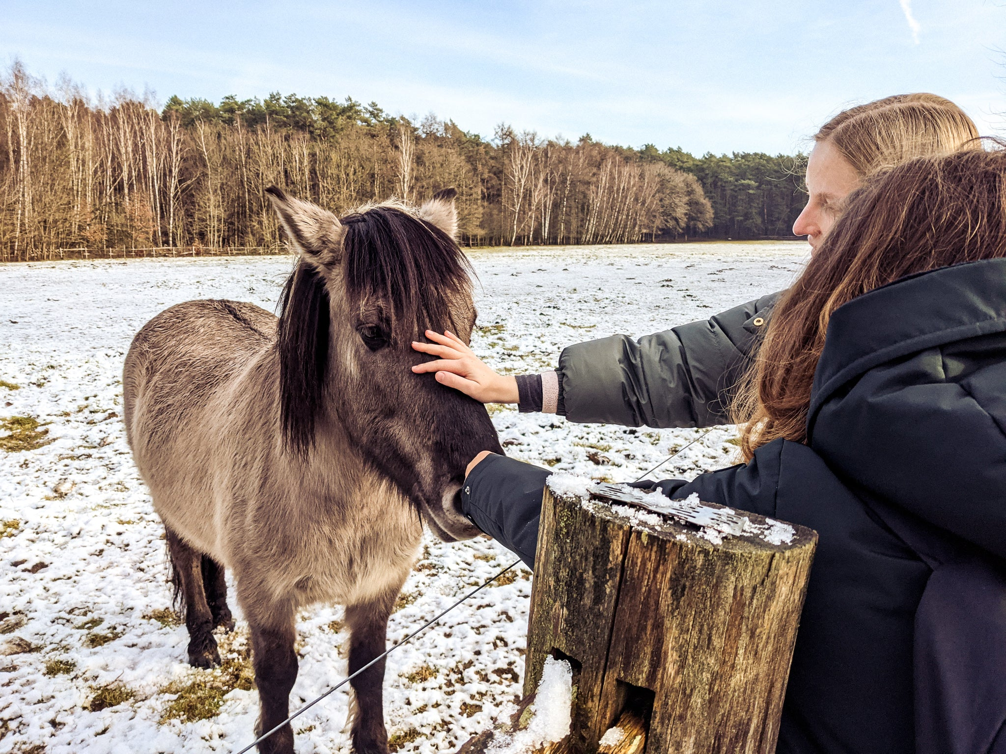 two girls petting horses