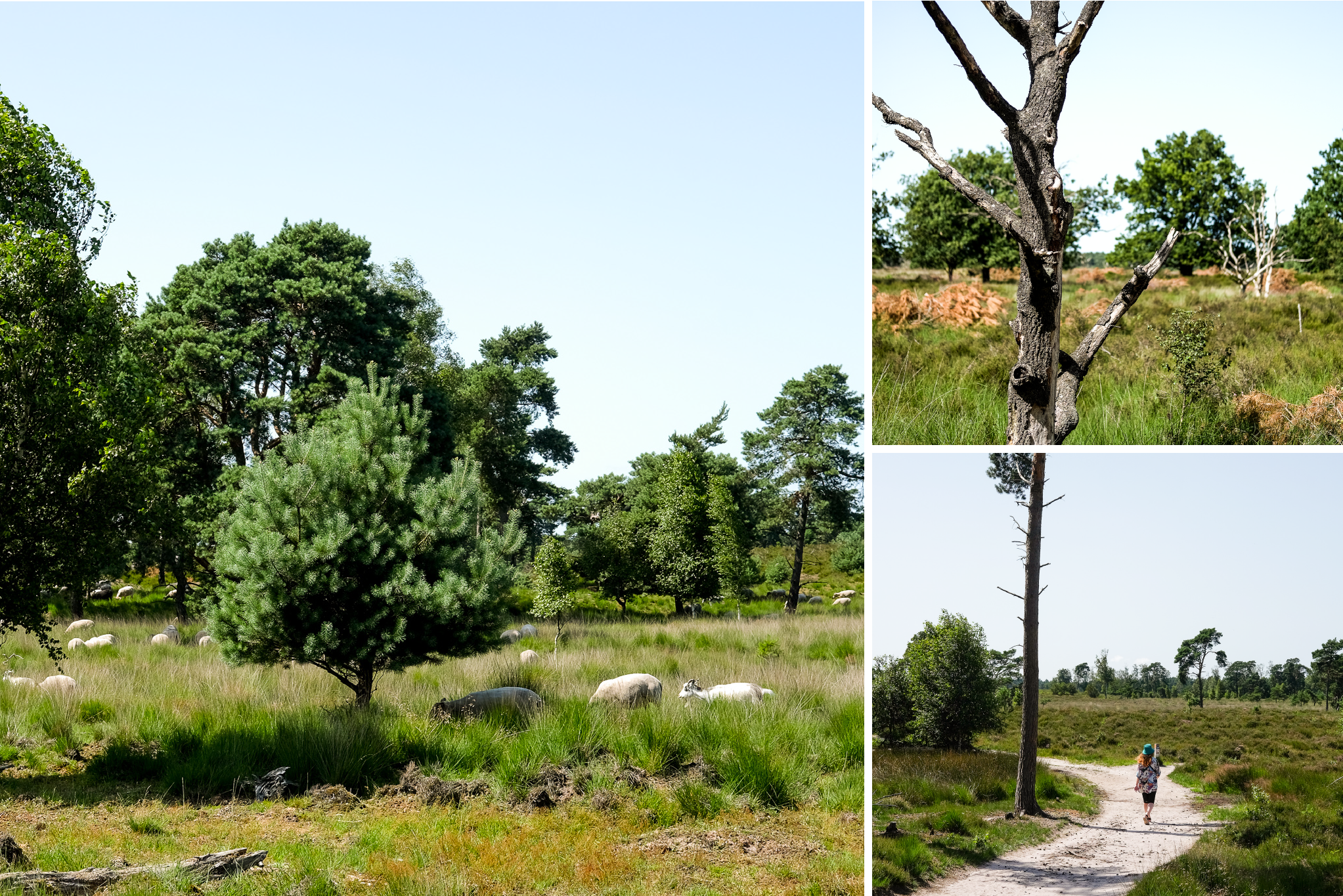 collage of views of the beautiful nature of the kalmthoutse heide