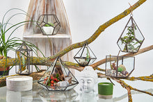 Load image into Gallery viewer, Collection of Glass Terrariums