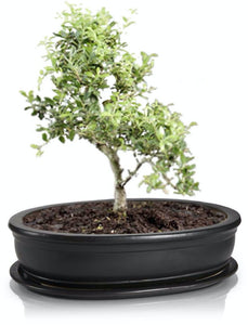 BONSAI vazonai