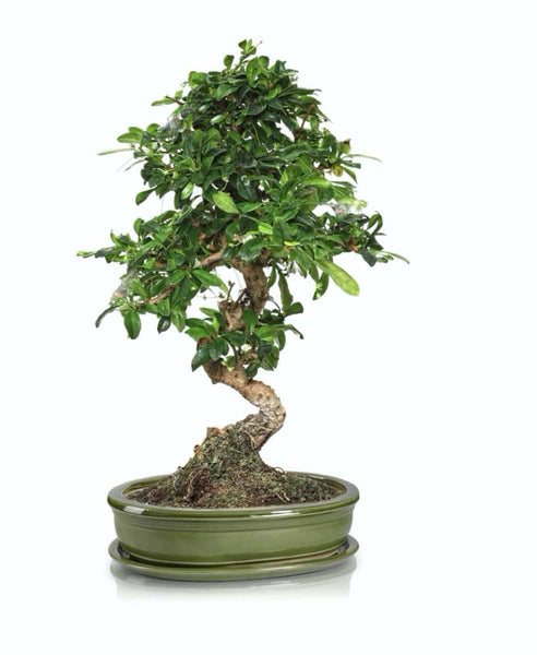 BONSAI vazonas 16038