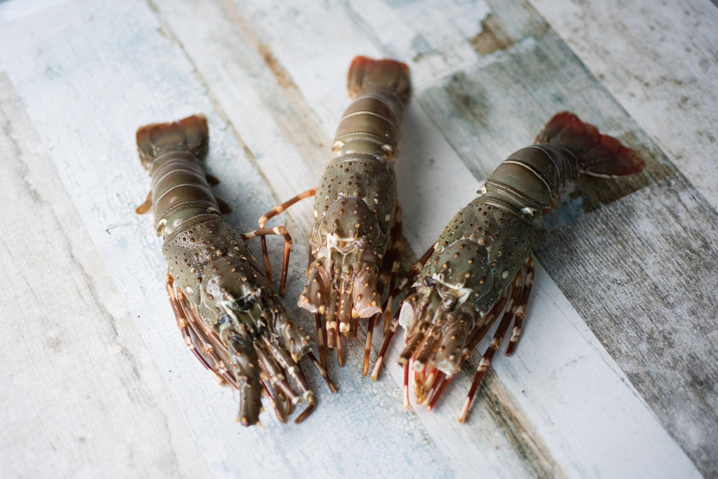 Frozen Bamboo Lobsters (400 to 600g)