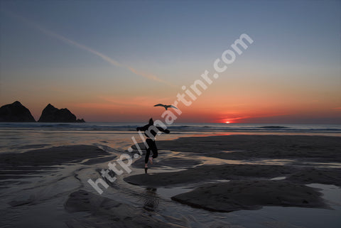 Holywell Bay Dancing Birds II