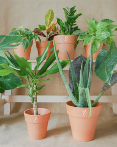 CONFIDENCE - Plant Family of 8