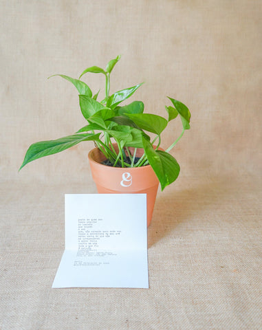 Curae_Plant_Poem_Bundle