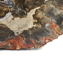 Load image into Gallery viewer, Fossilised / Petrified Wood