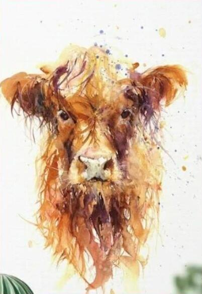 Highland Cow Diy Paint By Numbers Kits UK AN0204