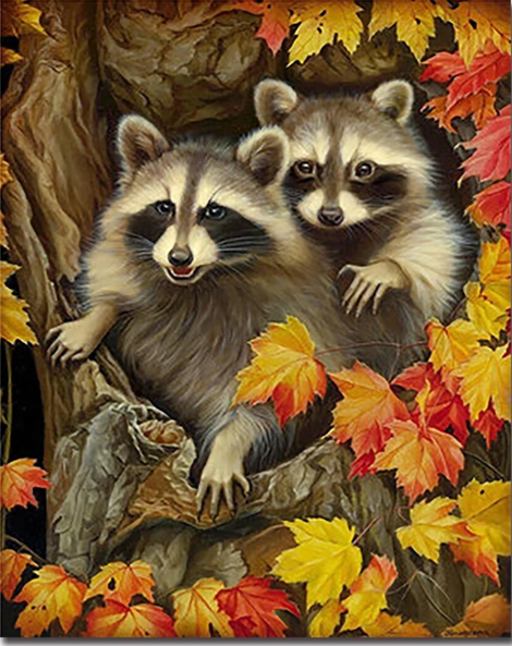 Raccoon Diy Paint By Numbers Kits UK AN0889