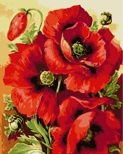 Poppy Flower Diy Paint By Numbers Kits UK PL0115