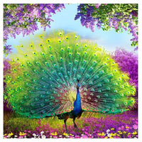Peacock Diy Paint By Numbers Kits UK AN0128