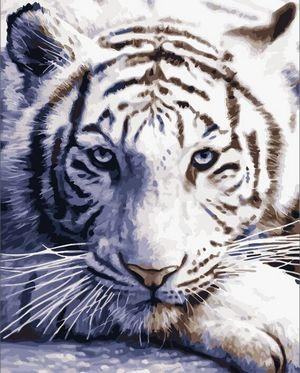 Animal Tiger Diy Paint By Numbers Kits UK AN0013