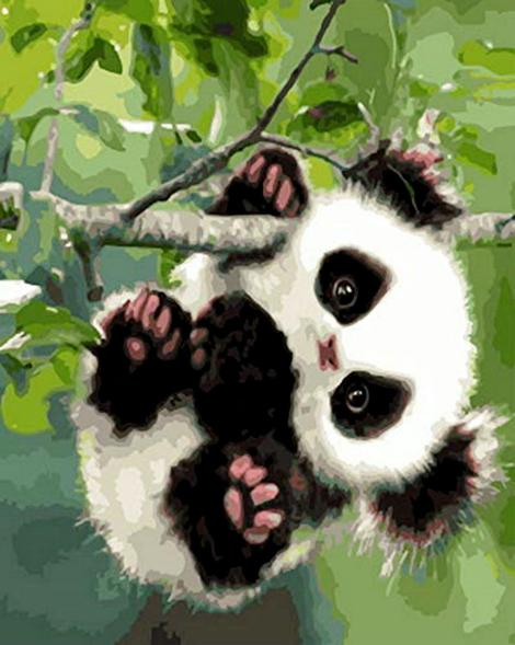 Panda Diy Paint By Numbers Kits UK AN0146