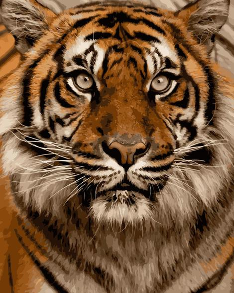 Tiger Diy Paint By Numbers Kits UK AN0014
