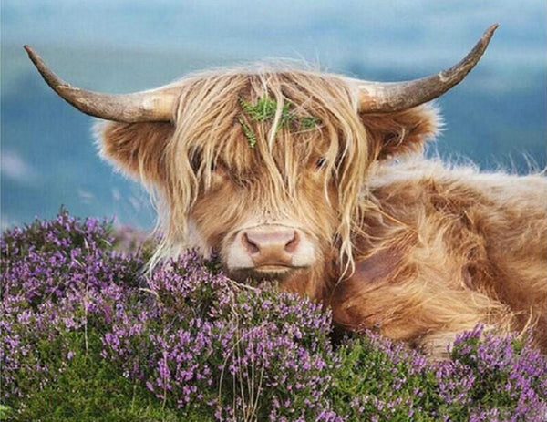 Highland Cow Diy Paint By Numbers Kits UK AN0186