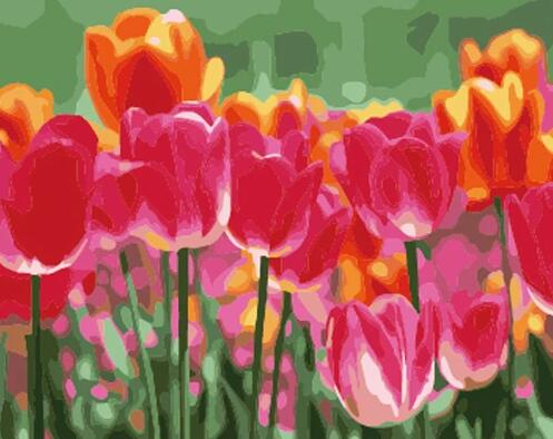 Tulips Diy Paint By Numbers Kits UK PL0250